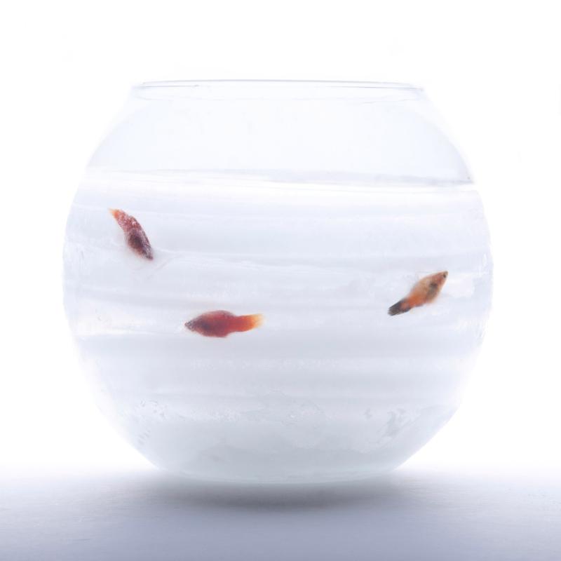 fanny-orge-cryogénie-aquarium-poissons-glace