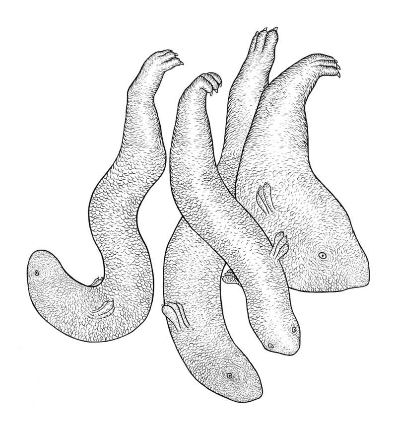puzzle-poissons